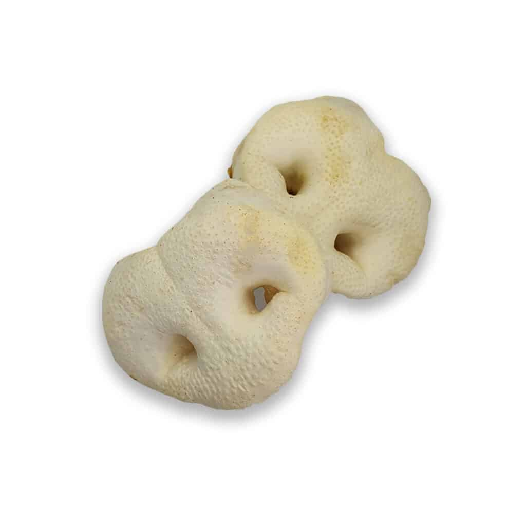 Pig Snouts for dogs