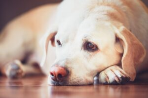 How To Prevent Separation Anxiety In Dogs?
